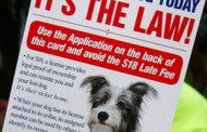 Time is Running Out to Purchase 2017 Dog Licenses in Summit County