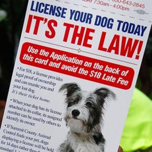 summit county dog license