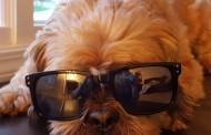 Hank Approved: Celebrate National Dog Day