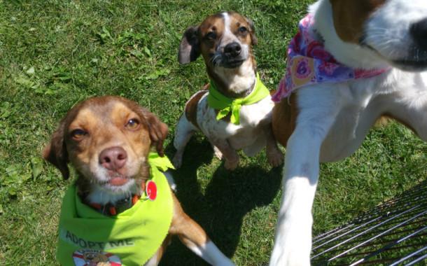 Canine Lifeline Reunion at Longwood park