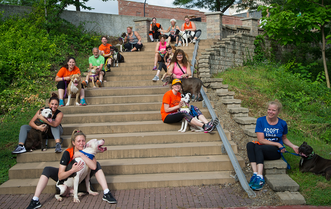 Volunteers from Running Dog Take Pups from Summit County Shelter for a 2 Mile Pack Run