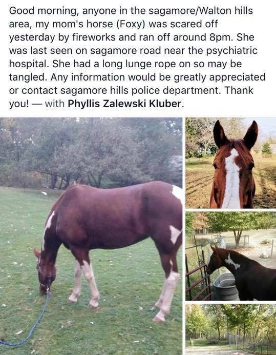 LOST HORSE REWARD is now $5000 no questions asked. They just want Foxy back!