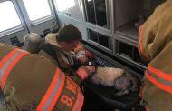 Vic's Corner: Macedonia Fire Department Saves Dog at Sagamore Hills Condo Fire