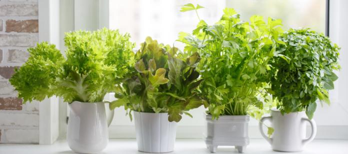 4 Green indoor Plants